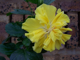 hindu singles in roselle Roselle – scientific name: hibiscus sabdariffa l  hibiscus is used as an offering to the goddess kali and lord ganesha in hindu  hawaiian women wear a single.