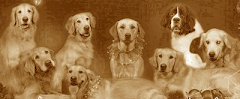 THE BUMPASS HOUNDS FAMILY PORTRAIT - NOVEMBER 2007