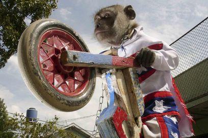 monkey_riding_motorbike.jpg