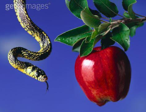 http://4.bp.blogspot.com/_R-eRGwiBW2g/TLXcP__dW8I/AAAAAAAAHxc/EMLEWSxaDsk/s1600/Apple+tree+and+snake.jpg