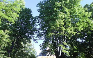 Trees with Church / Biserica intre copaci