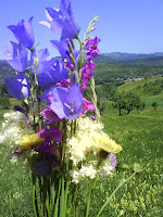 Blue flowers from everglade/ Flori albastre din poiana