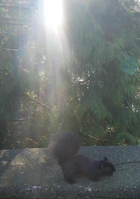 squirrel in sunlight