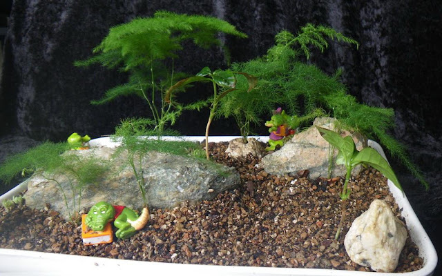 Miniature garden with Asparagus Fern