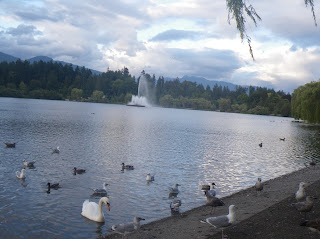 Seagulls, Lost Lagoon, Vancouver