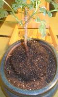bonsai materials