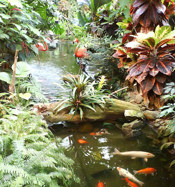 Scented leaf plant stands and display pedestals for Natural pond plants