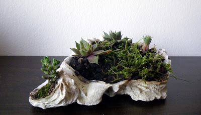 Double-oyster-shell centerpiece for desk with accent plants