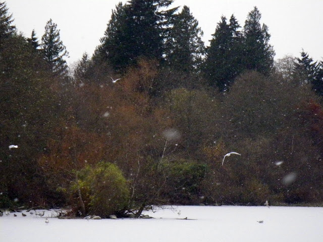 Seagulls and snowflakes over frozen Lost Lagoon