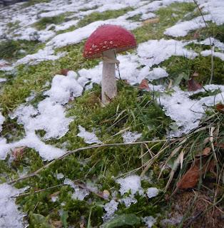 Mushroom in snow