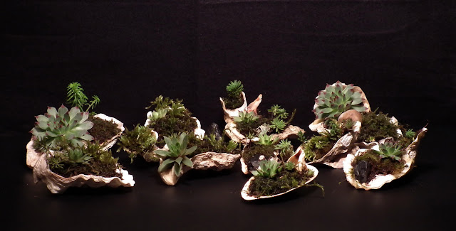 Accent plants in oyster shells