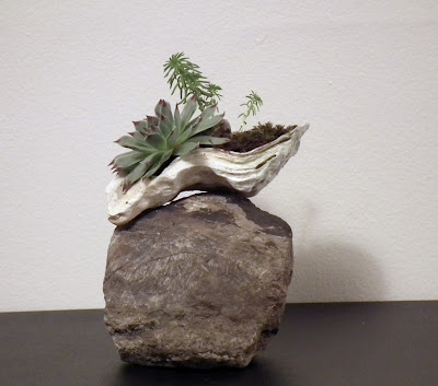Oyster shell with succulent plants on calcite rock