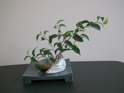 Chinese sleeping in the shadow  of ficus wiandi plant