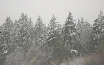 See how December is snowing