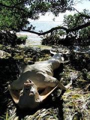Makhluk Allah Yang DiTemui Selepas Tsunami 2006!