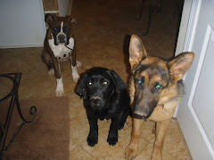 Vinnie, Aspen & Ava sitting nicely before going outside