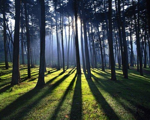 Foto Bayangan Pemandangan Pohon