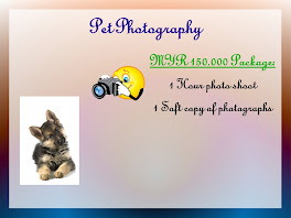 Pet Photography Packages (Home & Studio)