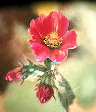 Cane Cholla Bloom - Pastel