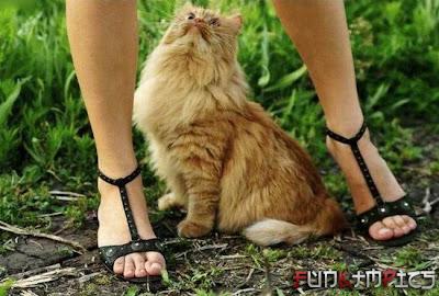 kucing paling beruntung sedunia