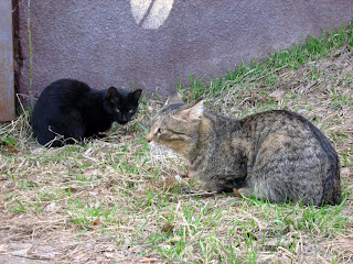 Sad-Eyed Brown Mackerel Tabby Old Cat