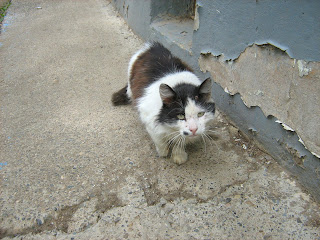 Beaten Hungry Old-Cat