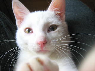 My Third White Lil' Kitten: Part One
