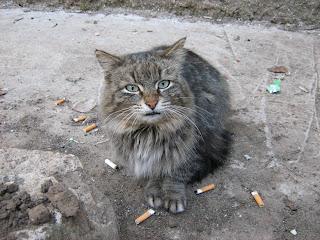 Old Multi-Coloured Street Cat