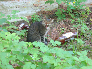 Cautious Green-Eyed Cat