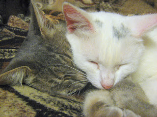 Sleeping Kitty-Mother and Cat-Son