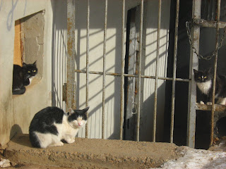 Street Cats Family: Mother
