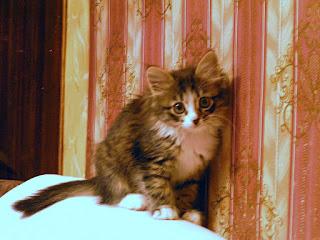 My First Multi-Coloured Kitten