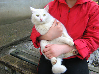"Young White Cat ""Snowball"": Part Two"