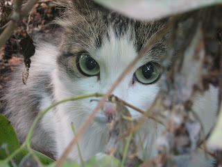 Hiding Shy Cat