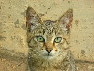 He-Homeles Kitten