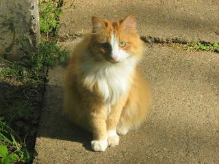 Sunny Ginger Cat