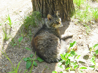 Old Decrepit Cat