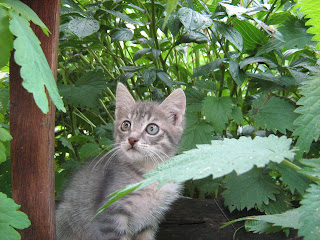 "Young Smoky Kitten in ""Catofamily: Part Three"""