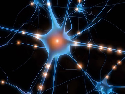 Ultime Notizie. Salute News: meno rischio Alzheimer per chi parla più lingue
