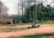 Backyard 1994