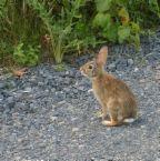 [bunnyroad]