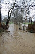 Swollen River Ash