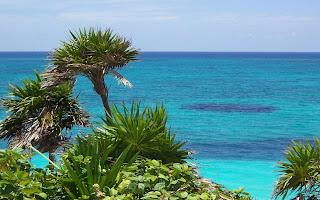Zee en palmbomen