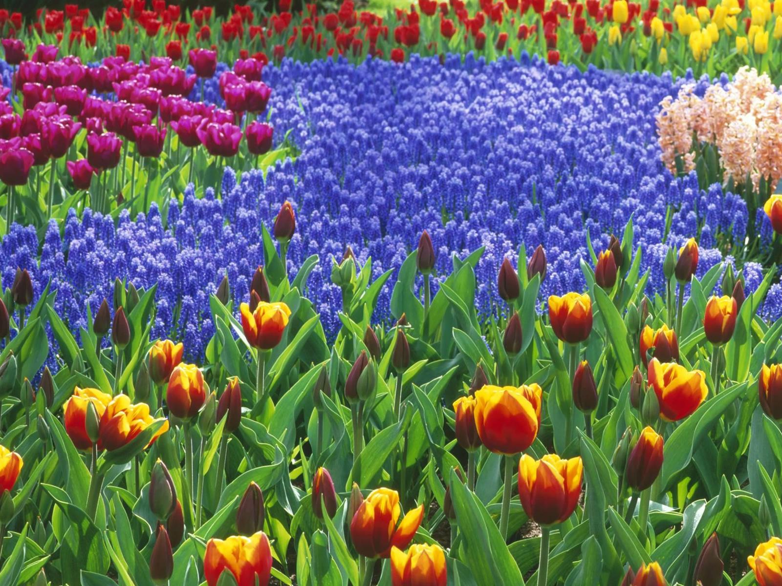 http://4.bp.blogspot.com/_RAlP3BmEW1Q/TQNb7NboLNI/AAAAAAAABCU/hBJxXALRNRA/s1600/Bloemen-achtergronden-bloemen-wallpapers-37.jpg