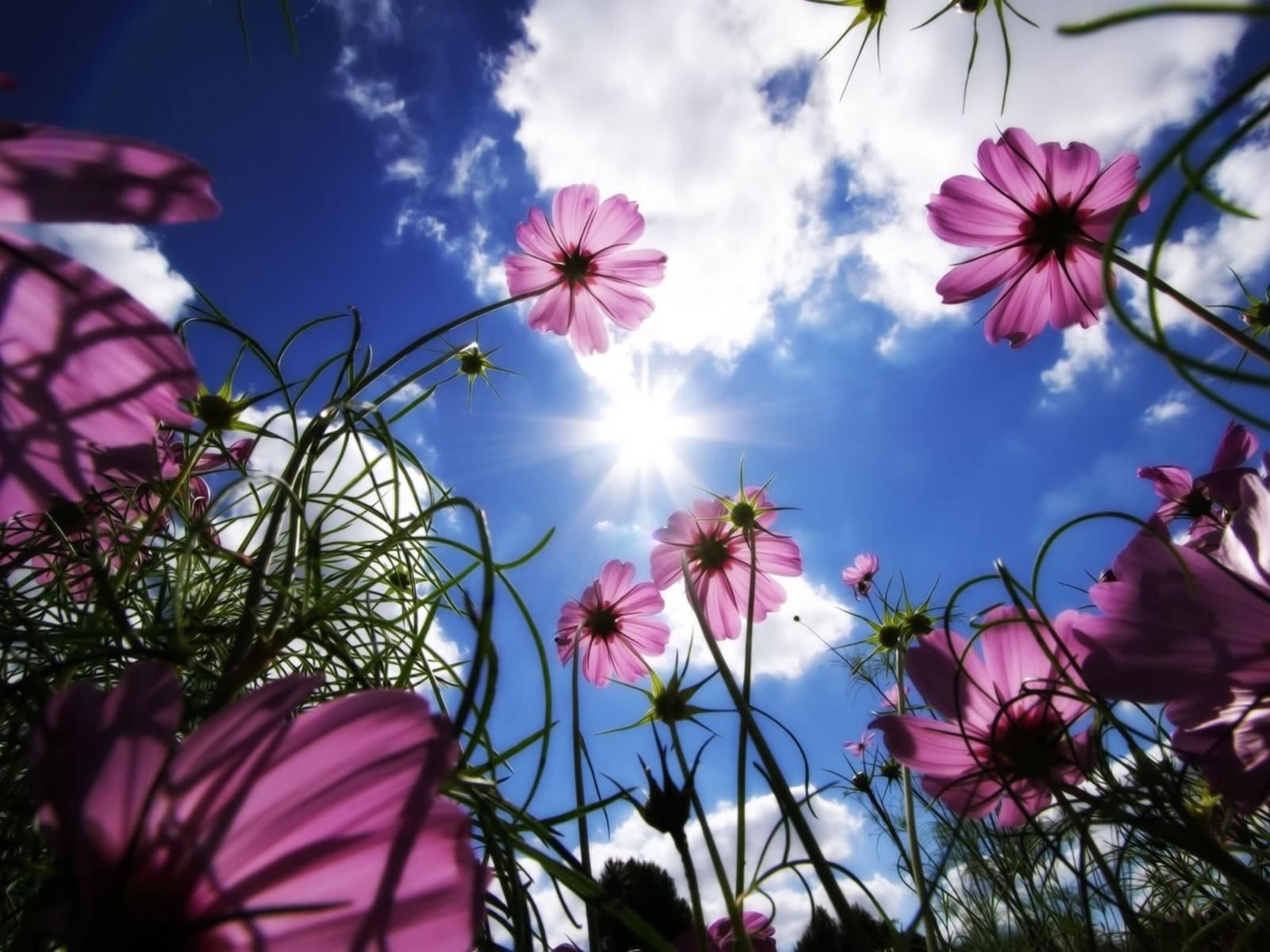 http://4.bp.blogspot.com/_RAlP3BmEW1Q/TQNbZNe75AI/AAAAAAAABAk/zbBmNhA2VSQ/s1600/Bloemen-achtergronden-bloemen-wallpapers-9.jpg