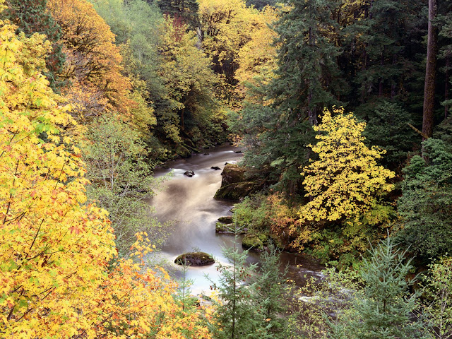 Landschap met een rivier door het bos