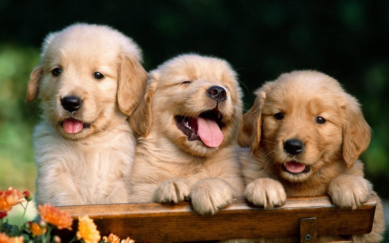 http://4.bp.blogspot.com/_RAlP3BmEW1Q/TQOSisQ88pI/AAAAAAAABoY/MJwMej1LMCI/s1600/Honden-achtergronden-honden-wallpapers-90.jpg
