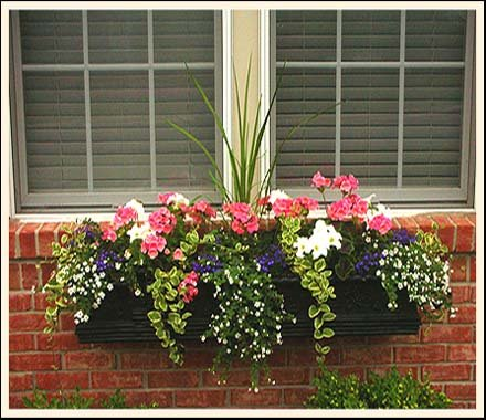 window box flowers askmax. Black Bedroom Furniture Sets. Home Design Ideas