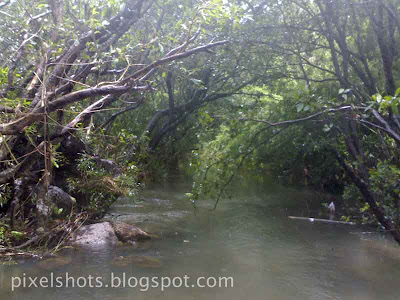 riparian-forest-athirapally-kerala,dense-forests-in-river-basins,riparian-vegetation-under-athirapally-waterfalls,riparian