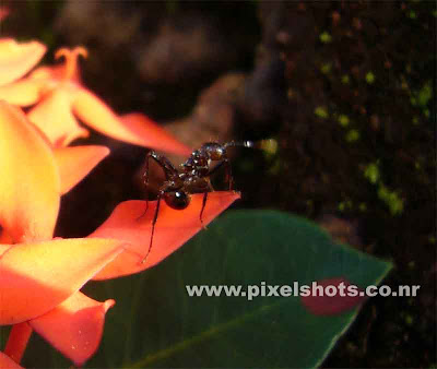 macro photograph of ant sitting on a flower in garden